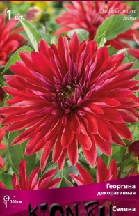 Георгина декоративная Селина (Dahlia decorative Selina)