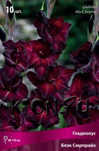 Гладиолус Блэк Сюрпрайз (Gladiolus Black Surprise)