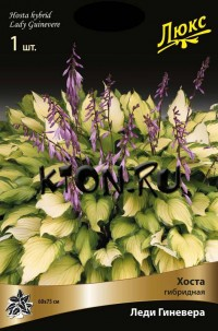 Хоста гибридная Леди Гиневера (Hosta hybrid Lady Guinevere)