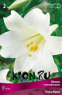 Лилия Лонгифлорум Сноу Квин (Lilium Longiflorum Snow Queen)
