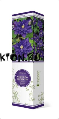 Клематис Бьюти оф Ворчестер (Clematis Beauty of Worcester)