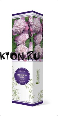 Клематис Вероника Чойс (Clematis Veronica`s Choice)