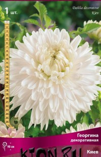 Георгина декоративная Киев (Dahlia decorative Kiev)