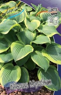 Хоста гибридная Абиква Мунбим (Hosta hybrid Abiqua Moonbeam)