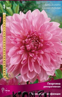 Георгина декоративная Лавендер Перфекшн (Dahlia decorative Lavender Perfection)