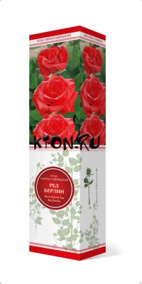 Роза чайно-гибридная Ред Берлин (Rose Hybrid Tea Red Berlin)