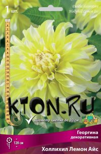 Георгина декоративная Холлихил Лемон Айс (Dahlia decorative Hollyhill Lemon Ice)