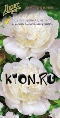Пион Боул ов Крим (Paeonia Bowl of Cream)