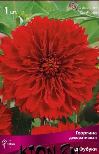 Георгина декоративная Ред Фубуки (Dahlia decorative Red Fubuki)