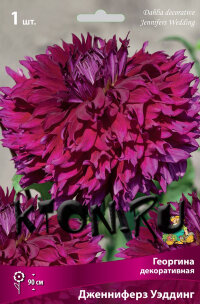 Георгина декоративная Дженниферз Уэддинг (Dahlia decorative Jennifers Wedding)