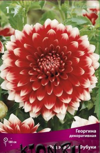 Георгина декоративная Ред энд Вайт Фубуки (Dahlia decorative Red and White Fubuki)